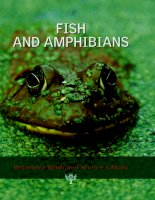 FISH AND AMPHIBIANS (Britannica Illustrated Science Library) pdf