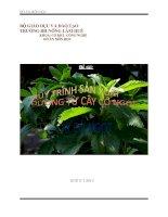 đề tài ' tìm hiểu quy trình sản xuất đường ăn kiêng từ cây cỏ ngọt '