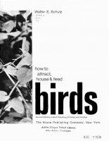 Birds - Section 1 - Intro pptx
