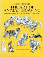 The Art Animal Drawing - Tips on drawing animal pptx