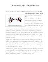 Tác dụng trị liệu của phèn chua ppsx