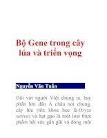 Bộ Gene trong cây lúa và triển vọng (tt) ppt