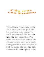 cấu trúc của protein doc