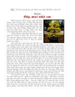 Bài Văn Tả Cây Mai - Lê Gia Bảo 6/4