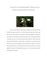 Chuyên đề Trinh nữ hoàng cung: Bài 1: Tác dụng của trinh nữ hoàng cung đã được khoa học chứng minh doc