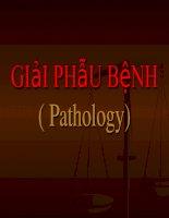 Giới thiệu bộ môn giải phẫu bệnh