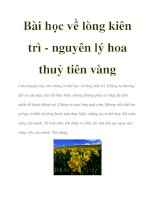 Bài học về lòng kiên trì - nguyên lý hoa thuỷ tiên vàng pps