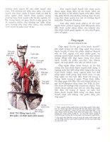 Atlas giải phẫu người - Phần nội tạng (Phần 10) pptx