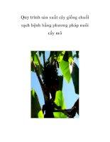 Quy trình sản xuất cây giống chuối sạch bệnh bằng phương pháp nuôi cấy mô ppt