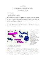 Hình thái, cấu tạo của các nhóm vi sinh vật khác docx