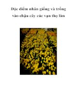 Đặc điểm nhân giống và trồng vào chậu cây cúc vạn thọ lùn pdf