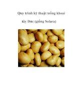 Quy trình kỹ thuật trồng khoai tây Đức (giống Solara) pot
