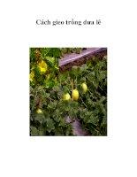 Cách gieo trồng dưa lê pptx