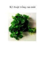 Kỹ thuật trồng rau mùi pdf