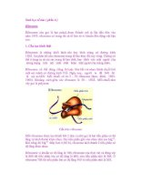 Sinh học tế bào ( phần 6 ) Ribosome pps