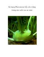 Sử dụng Pheromone bẫy côn trùng trong sản xuất rau an toàn pps