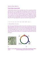 Sinh học tế bào ( phần 33 ) Chu kỳ tế bào và nguyên phân pot