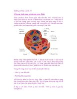 Sinh học tế bào ( phần 3 ) pps