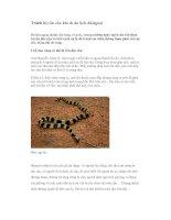 Tránh bị rắn cắn khi đi du lịch dã ngoại pptx