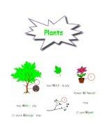 từ vựng về cây cối ppsx