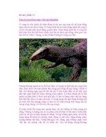 Bò sát ( phần 3 ) Chu kỳ hoạt động mùa ở Bò sát (Reptilia) pps