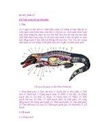 Bò sát ( phần 6 ) Hệ Tuần hoàn Bò sát (Reptilia) ppt