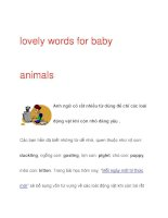 lovely words for baby animals pot