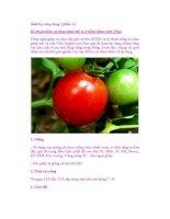 Sinh học ứng dụng ( phần 4 ) Kỹ thuật trồng cà chua ghép trái vụ ppt