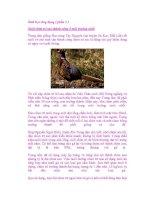 Sinh học ứng dụng ( phần 1 ) Nuôi chim trĩ sao thành công ở môi trường nhốt pdf