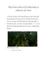 Một số nét cơ bản về kỹ thuật trồng và chăm sóc cây Neem potx