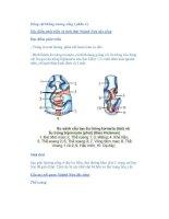 Động vật không xương sống ( phần 4 ) Đặc điểm phát triển và sinh thái potx