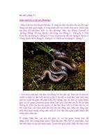 Bò sát ( phần 5 ) Mùa sinh sản ở Bò sát (Reptilia) ppsx