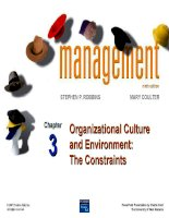 organizational culture and environment the constraints