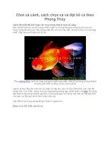 Chơi cá cảnh, cách chọn cá và đặt hồ cá theo Phong Thủy doc