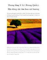 Thung lũng Y Lê (Trung Quốc): Dịu dàng sắc tím hoa oải hương doc