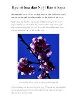 Rực rỡ hoa đào Nhật Bản ở Sapa potx