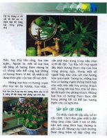 Chăm Sóc Cây Cảnh Trong Nhà - biên dịch Nguyễn Minh Tiến phần 2 doc