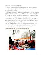 Tổng hợp các văn hóa - lễ hội Việt Nam part 6 pptx