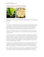 Bí quyết chữa bệnh huyết áp cao từ tỏi và lá sakê pot