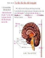 Bai 46 Trụ não, tiểu não, não trung gian