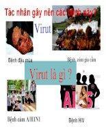 Bài 29: Cấu trúc các loại virut-sinh 10
