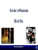 avian influenza - bird flu