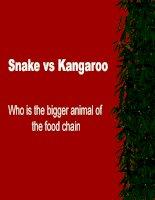 Trăn và Kangaroo