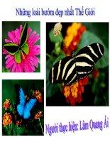các loài bướm đẹp nhất thế giới