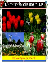 Lời thì thầm của hoa Tulíp