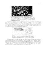 Khí hậu và khí tượng đại cương - Trần Công Minh Phần 8 pps