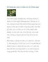 Kỹ thuật gieo ươm và chăm sóc cây Chùm ngây potx