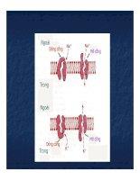 Bài giảng trao đổi chất qua màng tế bào part 8 pdf