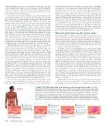 Công nghệ gene : Điều hòa biểu hiện gene part 6 pdf
