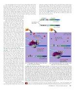 Công nghệ gene : Điều hòa biểu hiện gene part 3 pdf
